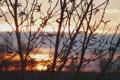 Картинка небо, облака, свет, ветки, полосы, рассвет, ветви