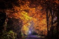 Картинка дорога, лес, пейзаж, природа