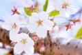 Картинка цветение, белые цветочки, веточка, лето
