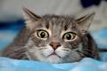 Картинка кошка, глаза, кот, страх