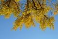 Картинка осень, небо, листья, дерево, ветка