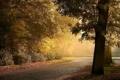 Картинка landscape, пейзаж, nature, road, avenue, town, сумерки