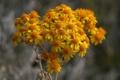 Картинка растение, осень, лепестки, ветка, природа