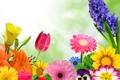 Картинка лепестки, коллаж, лилия, тюльпан, гербера