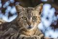 Картинка кошка, кот, взгляд, полосатый