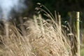Картинка трава, природа, забор