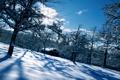 Картинка зима, деревья, пейзаж, природа, дом