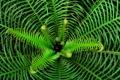 Картинка зелень, листья, растение, папоротник