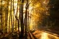 Картинка дорога, осень, лес, forest