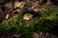 Картинка лес, макро, корни, дерево, мох, древесина