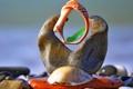Картинка природа, камни, конструкция, сооружение, ракушки, морской мир