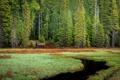 Картинка лес, деревья, ручей, болото, ель, домик, сторожка