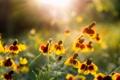 Картинка лето, макро, цветы