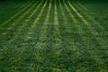 Картинка трава, макро, свет, природа, тень, тени, зелёный