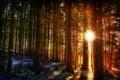 Картинка лес, солнце, природа, зима, свет, лучи