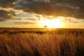 Картинка закат, Sun, Australia, природа, поле, вечер