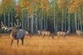 Картинка осень, желтая трава, живопись, олени, стадо, осенний лес, Daniel Smith