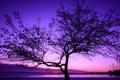 Картинка облака, небо, зарево, вечер, озеро, дерево