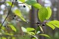 Картинка лес, макро, природа, роса, отдых, утро, прогулка
