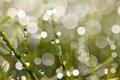 Картинка трава, макро, блики