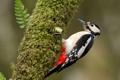 Картинка природа, птица, дятел
