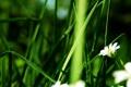 Картинка цветок, растение, стебель
