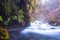 Картинка лес, деревья, природа, река, поток