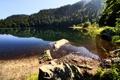 Картинка лес, вода, природа, озеро, гладь