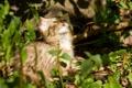 Картинка кошка, солнце, детёныш, котёнок, дикий, лесной кот