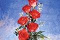 Картинка фон, розы, красные