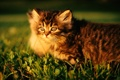Картинка котенок, котята, полосатый