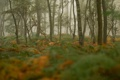 Картинка лес, трава, деревья, туман, растения