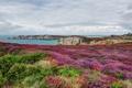 Картинка море, небо, облака, пейзаж, цветы, скалы, Франция