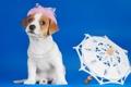 Картинка зонтик, собака, щенок
