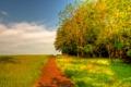 Картинка трава, деревья, дорога, природа, небо, поле, зелень