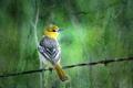 Картинка птица, фон, стиль
