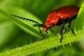 Картинка растение, жук, природа
