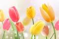 Картинка цветы, желтые, тюльпаны, розовые
