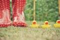 Картинка трава, сапоги, желтые, красные, уточки, резиновые