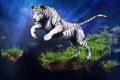 Картинка лапы, звезды, трава, небо, тигр, прыжок, белый