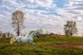 Картинка природа, пейзаж, конь