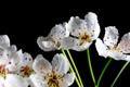 Картинка весна, лепестки, цветы
