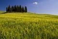 Картинка пейзаж, поле, деревья