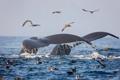 Картинка киты, птицы, море