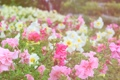 Картинка сад, парк, цветы