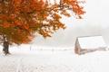 Картинка зима, снег, дерево, листва, домик
