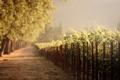 Картинка дорога, небо, природа, виноградники