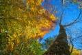 Картинка осень, небо, листья, дерево, ствол