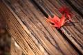 Картинка листья, фон, макро