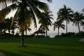 Картинка трава, пейзаж, путешествия, пальмы, отдых, остров, утро